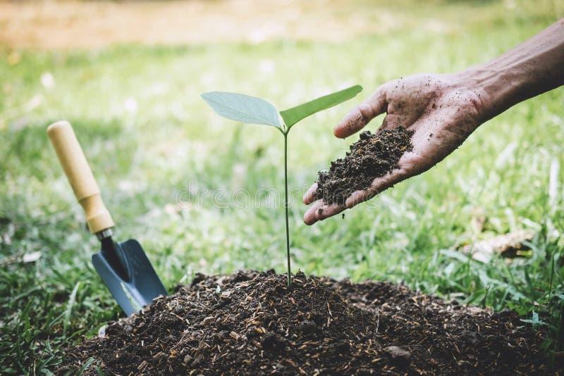 种植树,年轻人的手种植生长入土壤的幼木和树,当工作在庭院里作为时的救球 免版税库存图片