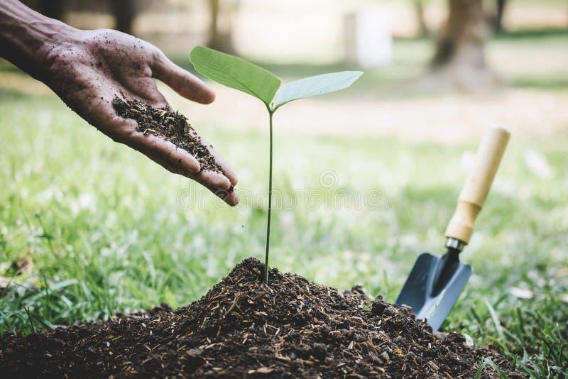 种植树,年轻人的手种植生长入土壤的幼木和树,当工作在庭院里作为时的救球 库存图片