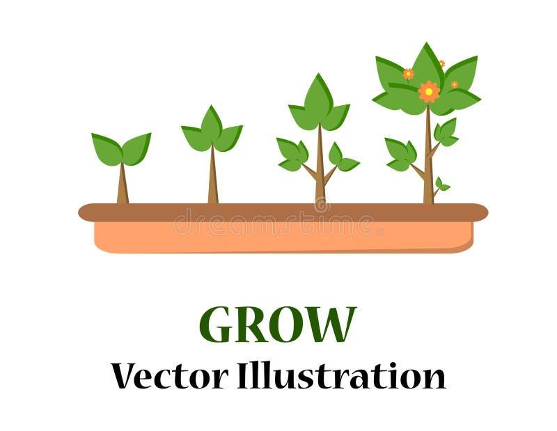 种植树Infographic  幼木庭园花木 向量例证
