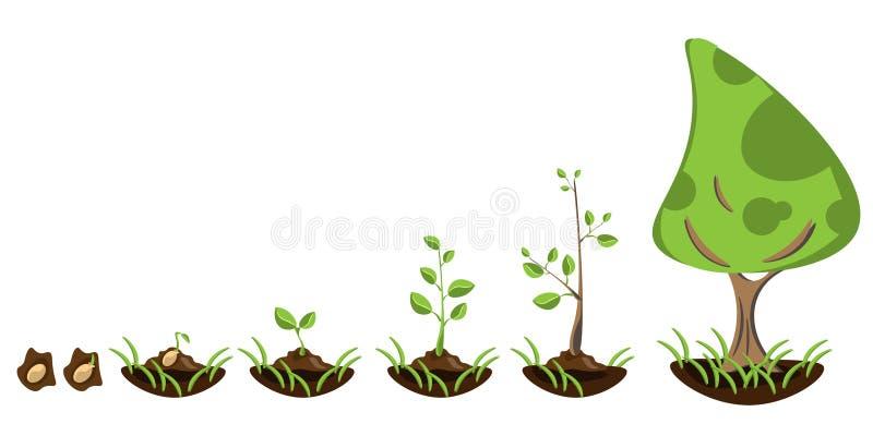 种植树Infographic  库存例证