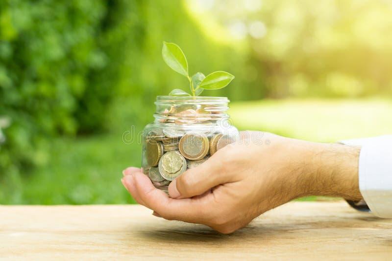 种植生长从在玻璃瓶子的金钱硬币 免版税库存照片