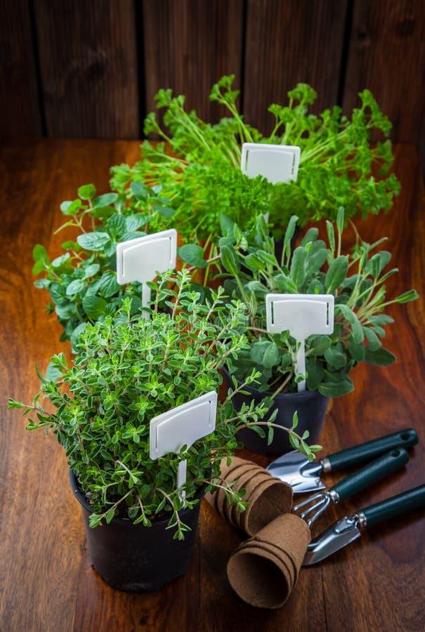 种植的各种各样的草本 免版税库存图片