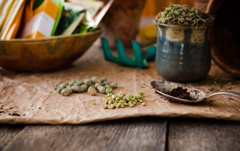 种植的种子 免版税图库摄影