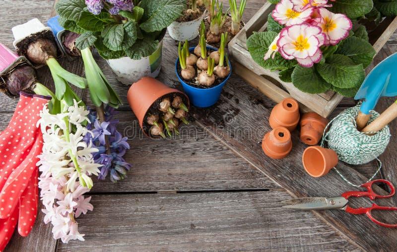 种植的鲜花在春天 免版税库存照片