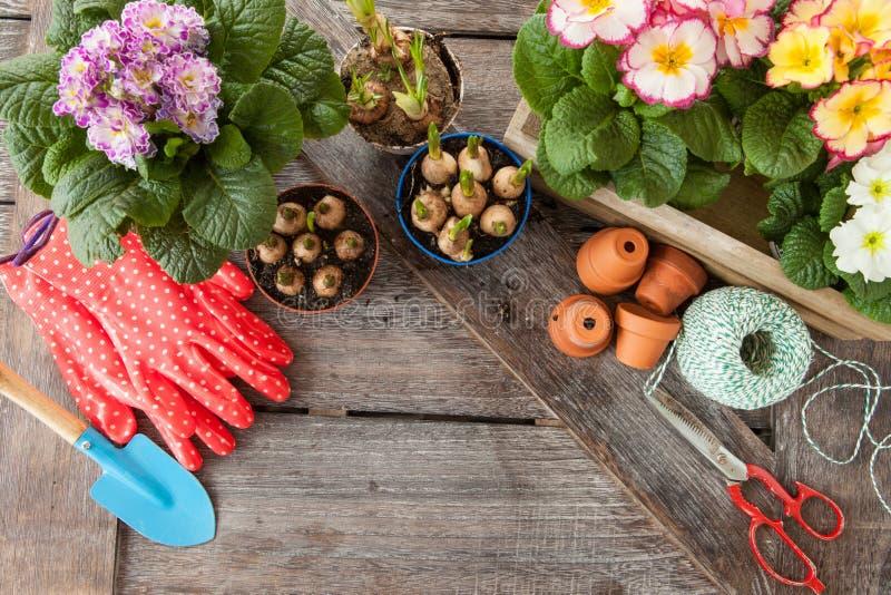 种植的鲜花在春天 免版税库存图片