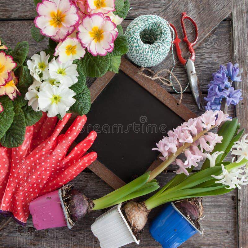 种植的鲜花在春天 库存照片