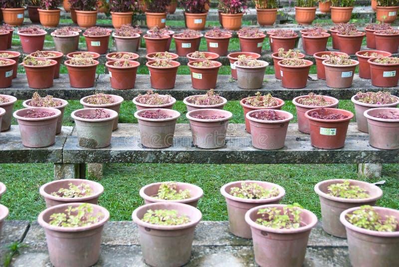 种植盆 免版税库存图片