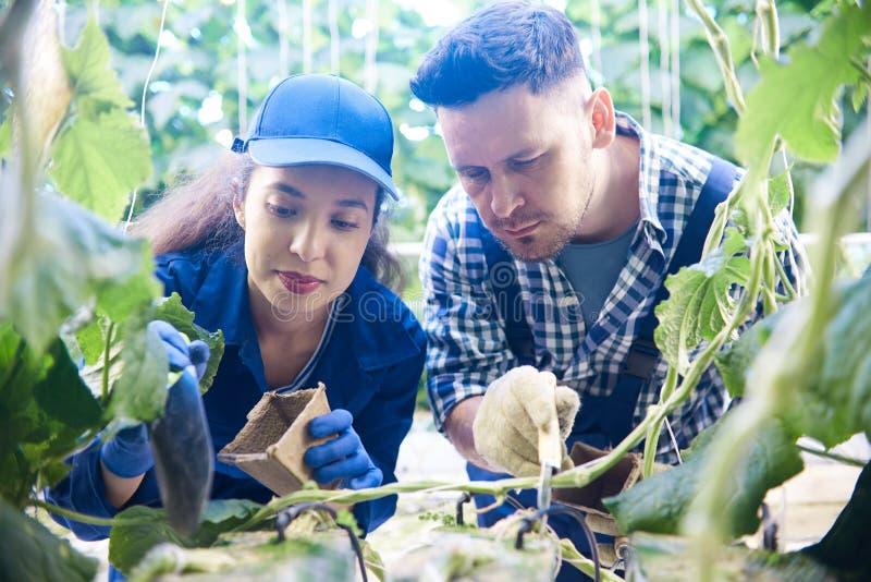 种植种子的两名工作者 免版税库存图片