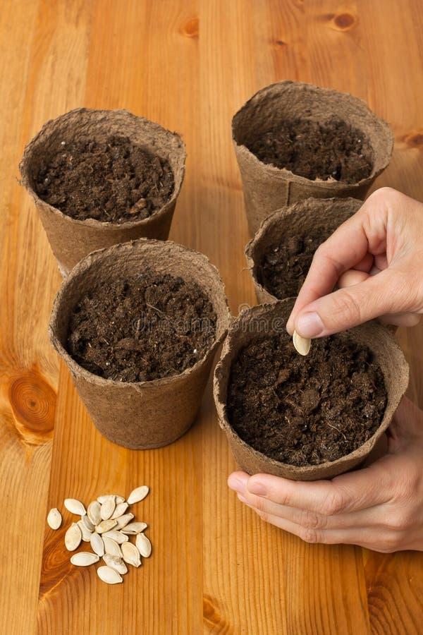 种植种子的花匠的手 免版税库存图片