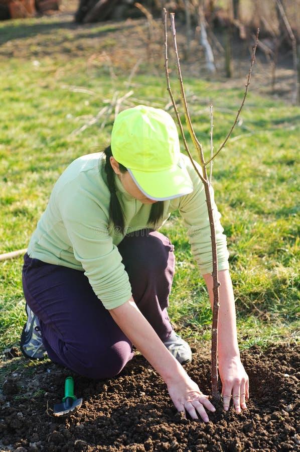 种植结构树妇女年轻人 免版税库存照片