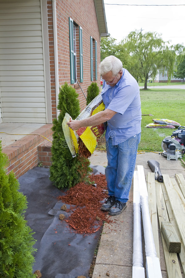 种植结构树的园丁 免版税库存图片