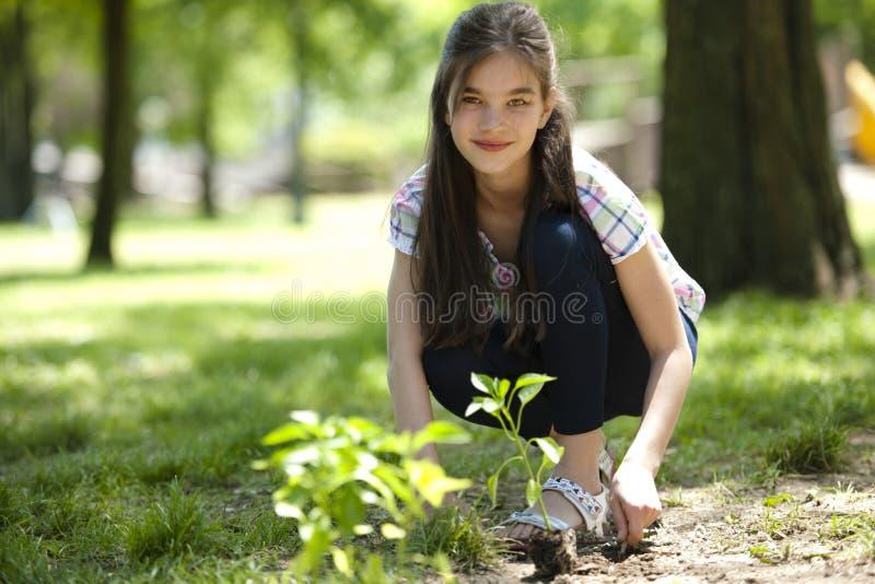 种植结构树的小女孩 免版税库存照片