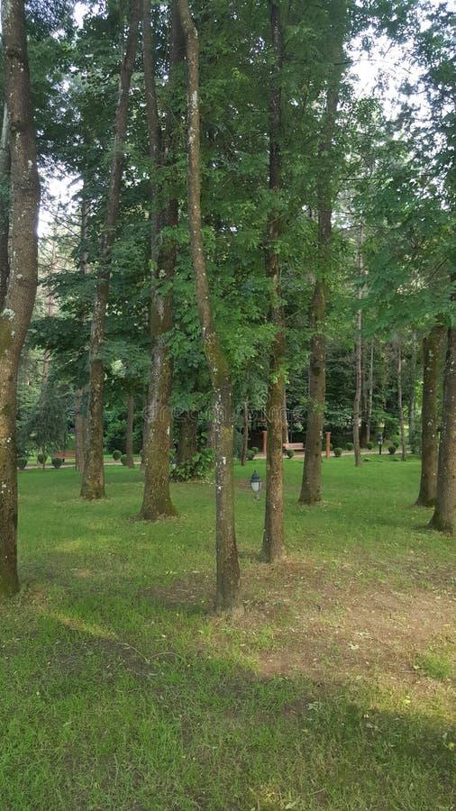 种植结构树 库存图片