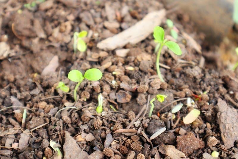 种植绿色叶茂盛植物树新的生活,生长从地面 免版税库存图片