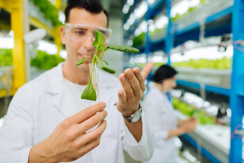种植绿色的专业男性农业学家戴着眼镜 免版税库存图片