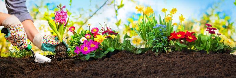 种植花在庭院里 库存图片