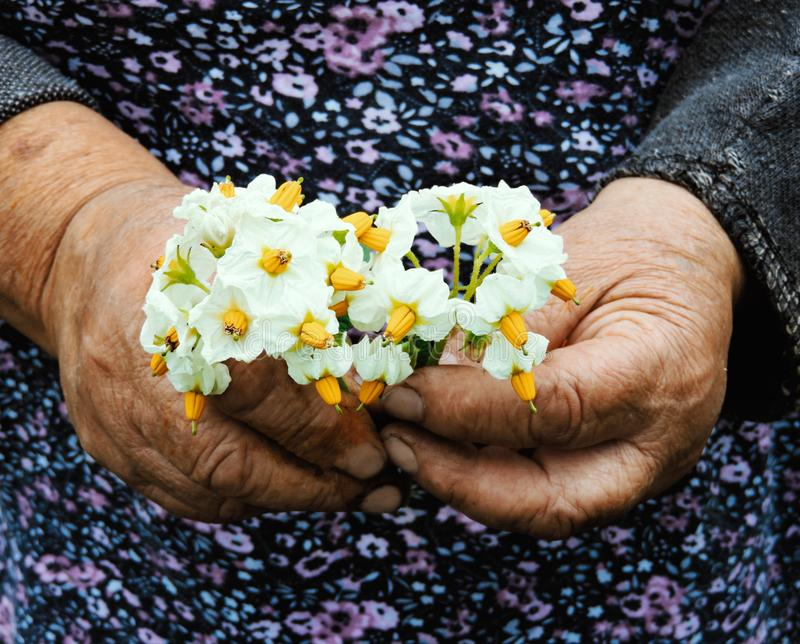 种植花的花匠手 E r 库存图片
