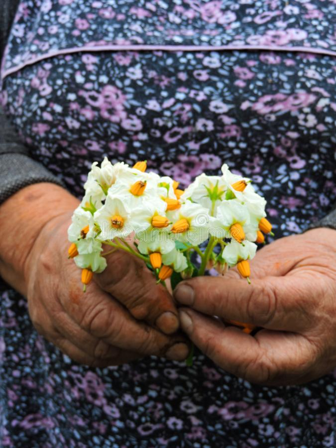 种植花的花匠手 E r 库存照片