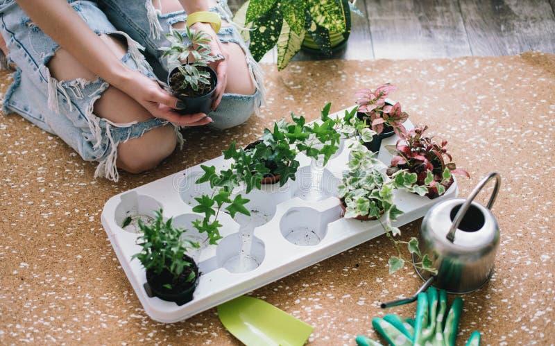 种植花,多汁植物在家 工作在家 植物和庭院工具在木背景, 免版税图库摄影