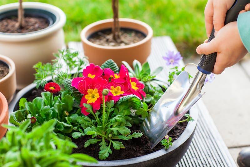 种植草本和花 库存照片