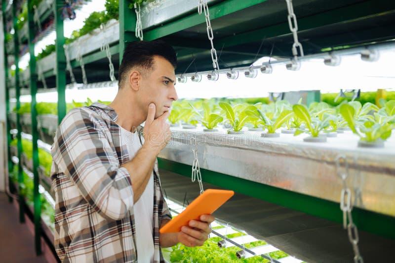 种植莴苣的深色头发的男性农业学家自温室 免版税库存图片