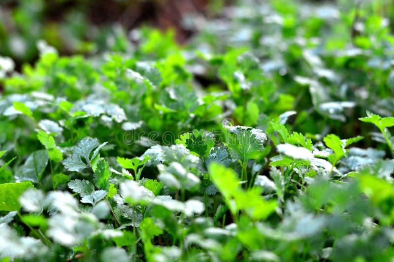 种植菜园/菜在土壤/有机杀虫剂菜的 库存照片