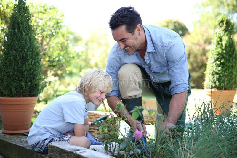 种植菜的小男孩和父亲 免版税库存照片