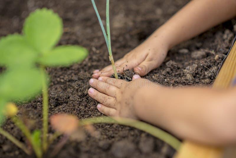 种植年幼植物幼木的孩子 库存照片