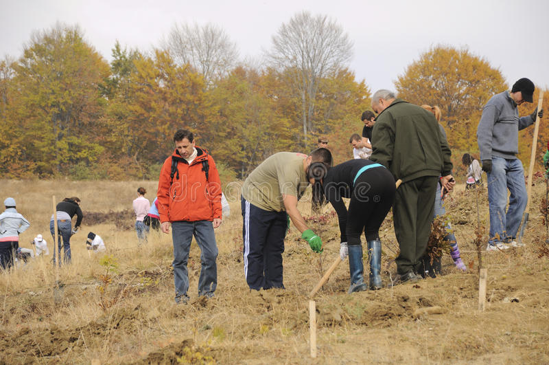 种植年轻树的志愿者 免版税库存图片