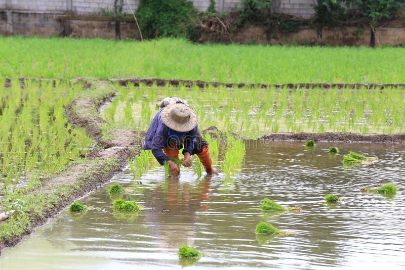 水稻种植培训课程班 短期培训班