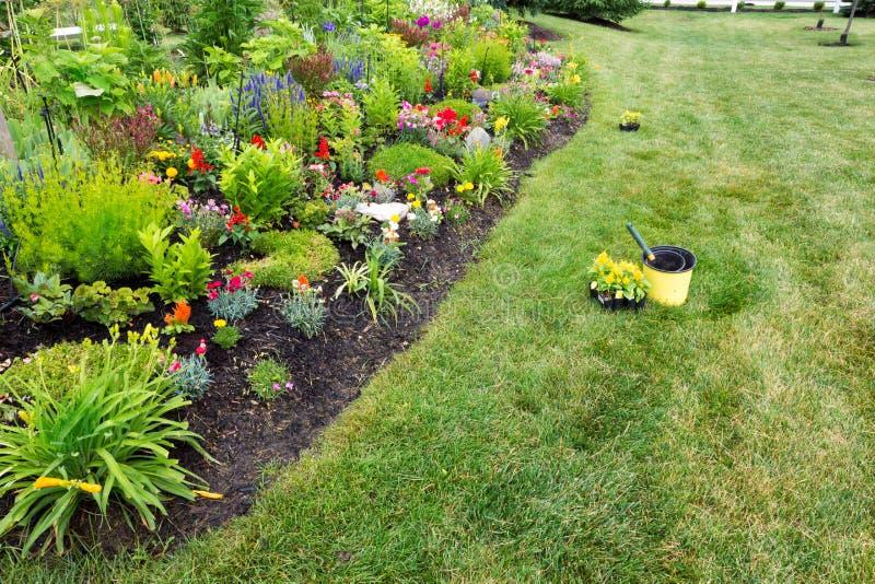 种植黄色鸡冠花在一个五颜六色的庭院里 免版税库存照片