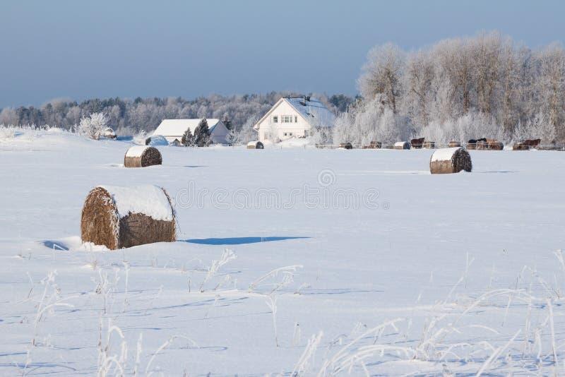 种田与一个谷仓和马在冬天 免版税库存图片