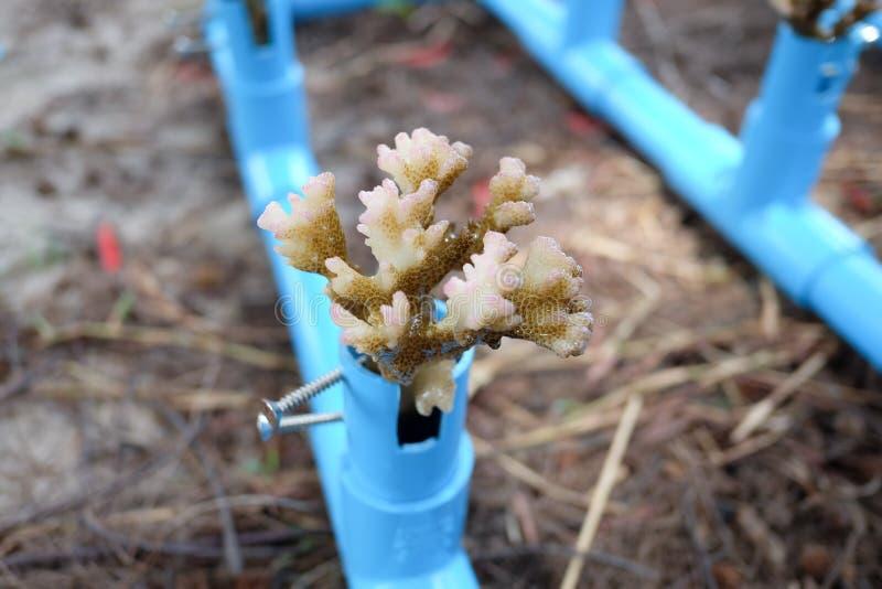 种田使用管子,美丽的珊瑚农场的珊瑚 免版税库存照片