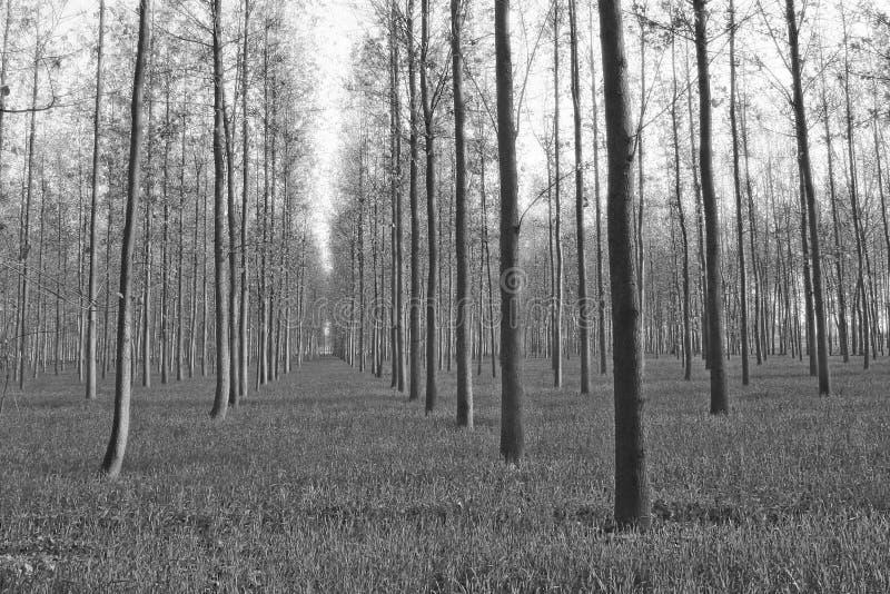 种田印度北部种植园风景结构树 免版税库存图片
