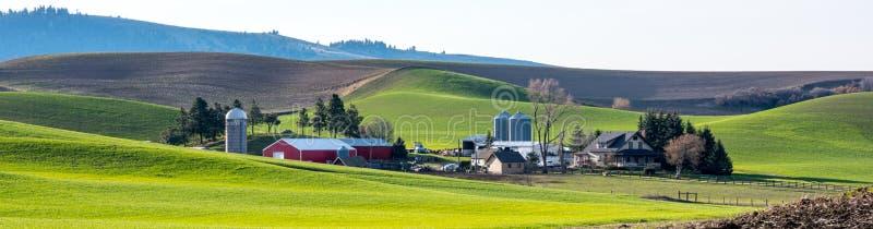 种田在与绿色麦田的Palouse 库存照片