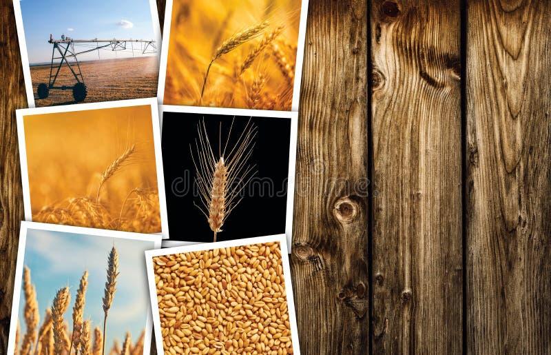 种田在农业照片拼贴画的麦子 免版税库存照片