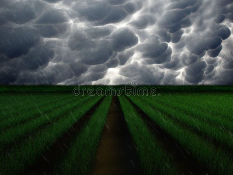 种田在雨风暴 库存例证
