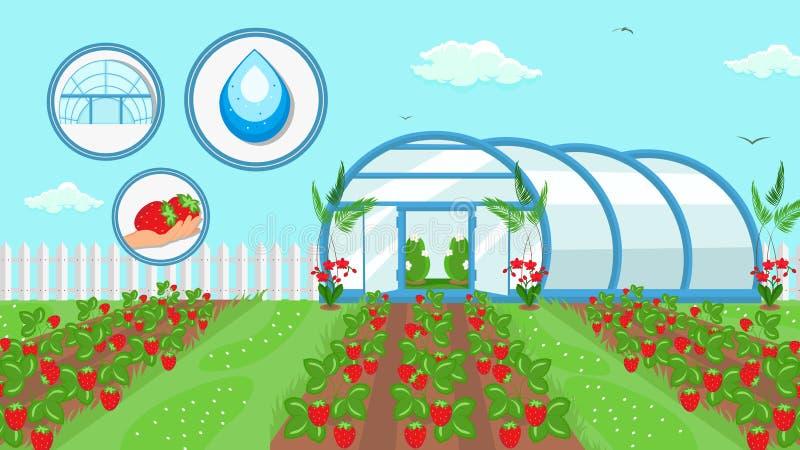 种田技术例证的莓果耕种 库存例证