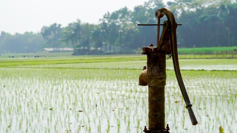 种田由管机器的米在冬天在印度 绿色,横式 免版税库存照片