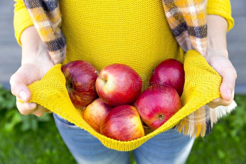 种田,从事园艺,收获,秋天和人概念-妇女用在秋天庭院的苹果 库存照片