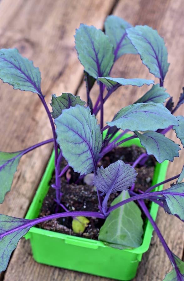 种田,耕种、菜概念农业和关心  图库摄影