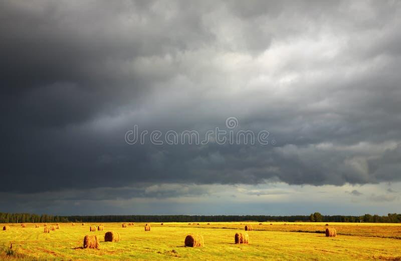 种秣草地 库存照片