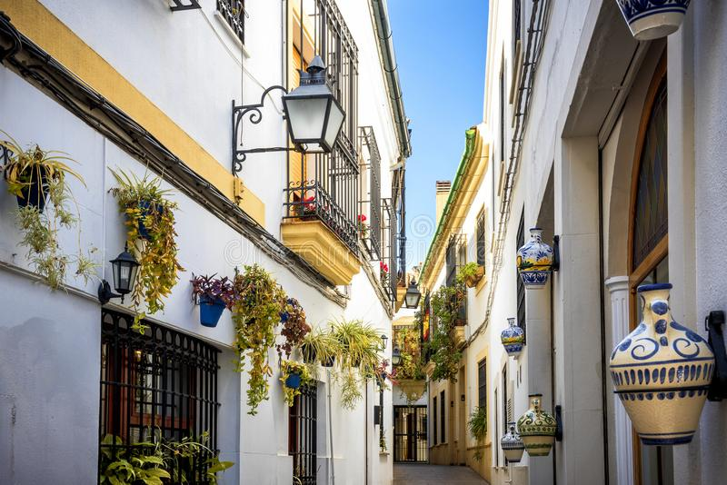 科多巴:在Juderia的老典型的街道与植物和花 Andalucia,西班牙 免版税库存图片