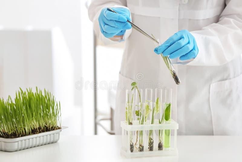 科学家与植物一起使用在实验室 免版税库存照片