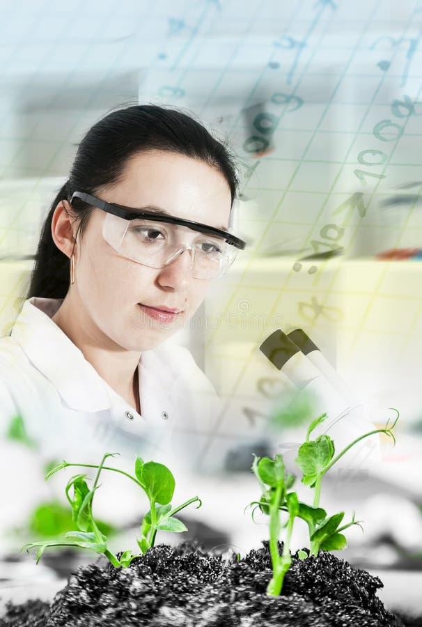 科学家举行的和审查的样品植物 免版税库存照片