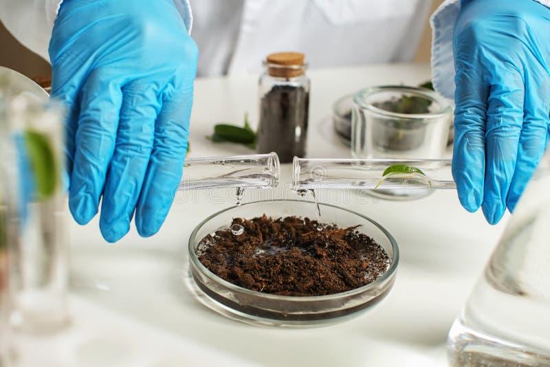 科学家倾吐的水到与土壤的培养皿里在实验室 库存照片
