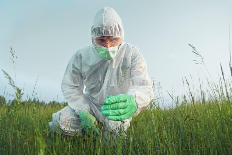 科学家农艺师审查绿色植物 免版税库存照片