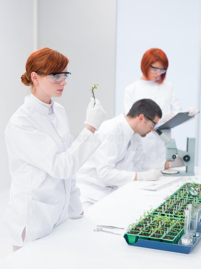 科学家在一个遗传工程实验室 免版税库存图片