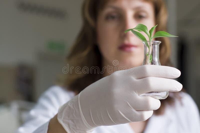 科学家妇女 库存图片