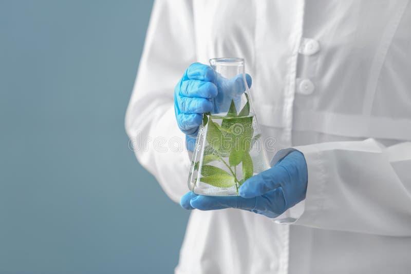 科学家有植物的藏品烧瓶颜色背景的 图库摄影